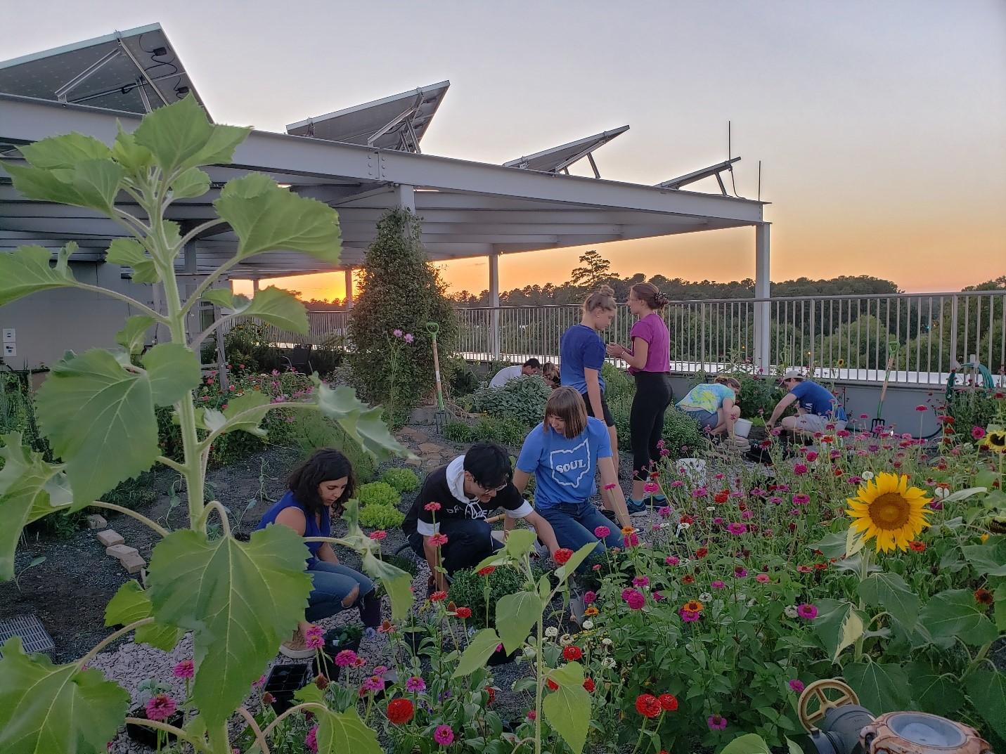 Backyard Garden Florist Roseboro Nc - House Backyards