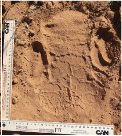 The footprint appears in reddish sand