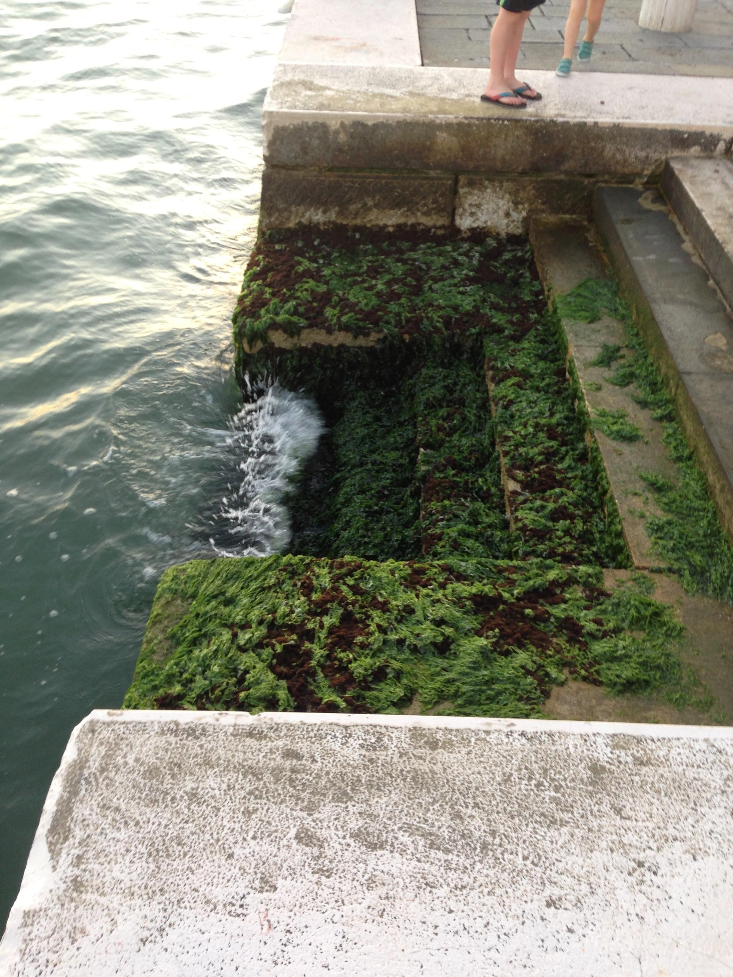 Moss covered steps in the sinking city of Venice.