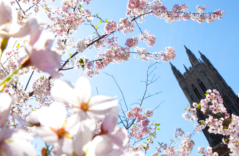 Duke chapel with cherry blossoms