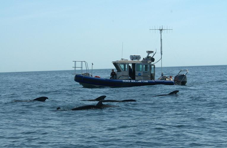 RV Richard Barber with dolphins DUML