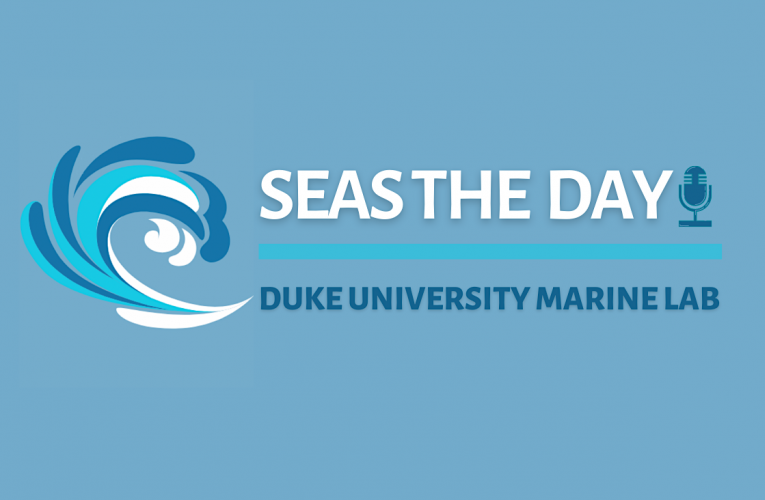 Seas The Day podcast