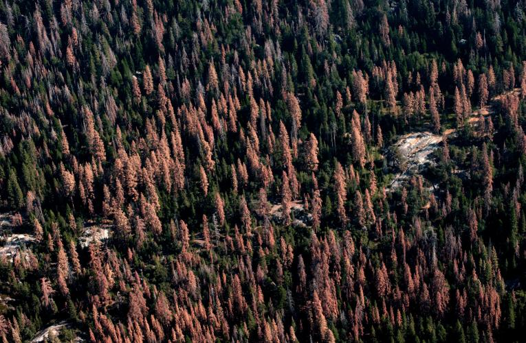 Drought-stricken forest