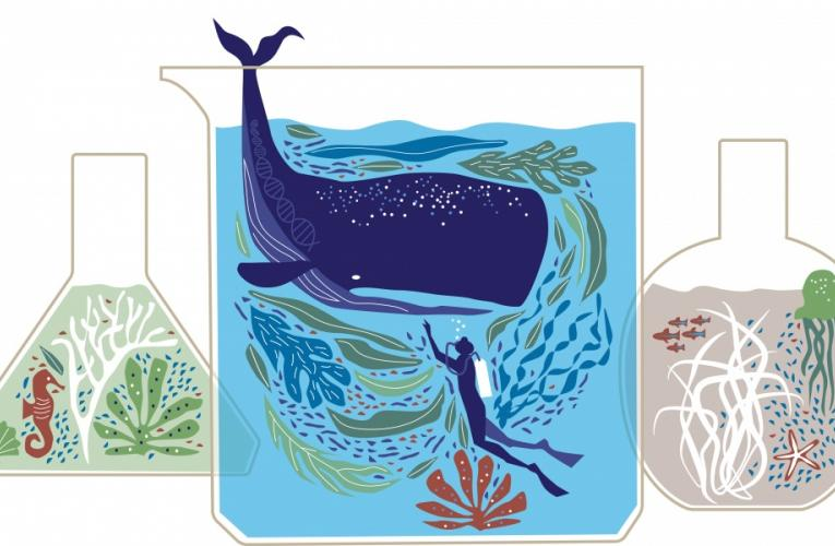 illustration of whale and scuba diver inside a scientific beaker