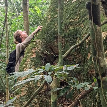 PhD student Graden Froese admires a forest giant in Gabon's Ivindo National Park.